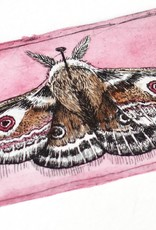 """""""Moth"""" etching with pink hand watercoloring, Lily Cozzens"""