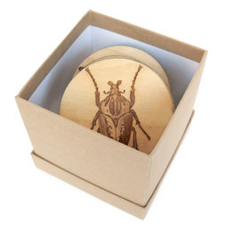 Kirsten Beard Birch Insect Coasters, Set of 4 by Kirsten Beard