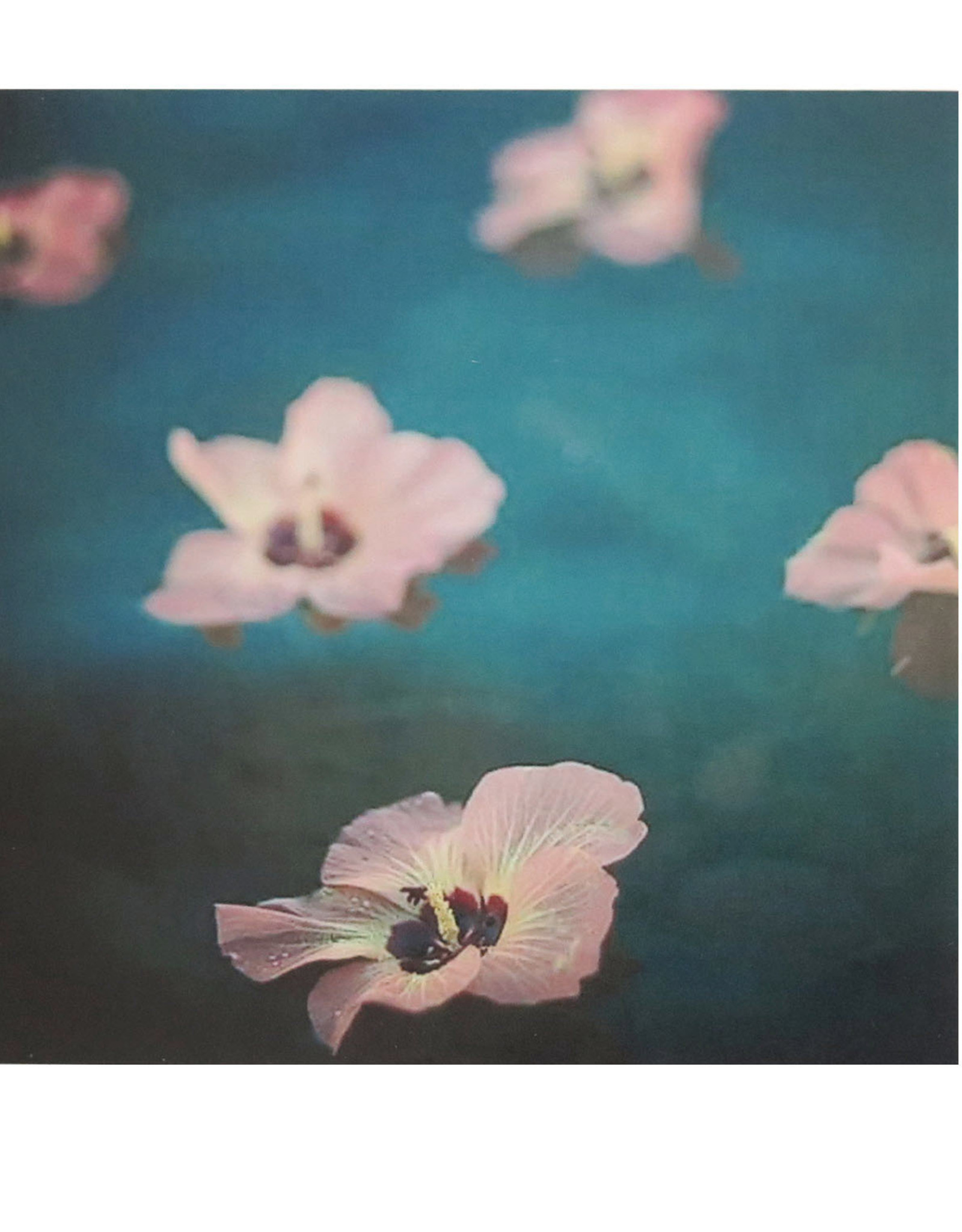 4x4 Tropical Flower Photo #2 by Larissa Rolley