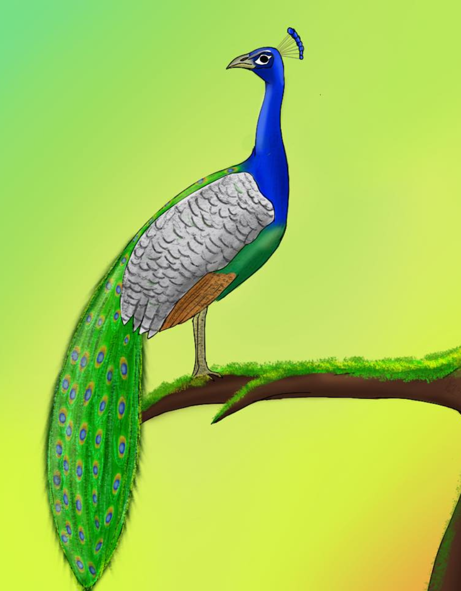 """""""Peacock"""" print by Kevin Resnick"""