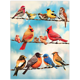 Birds on a Wire Puzzle 500pc