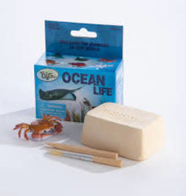 GeoCentral GeoCentral OCEAN ANIMALS DIG KIT