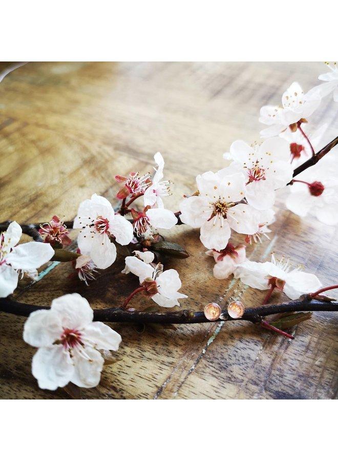Cherry blossom Silver Studs