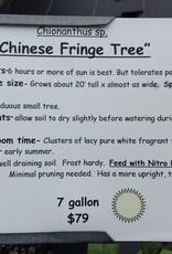FRINGE TREE CHINESE 7 GAL