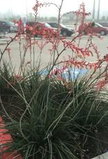 YUCCA, RED 3G