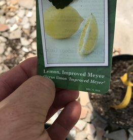 Fruit Tree, Citrus, Improved Meyer Lemon 3G