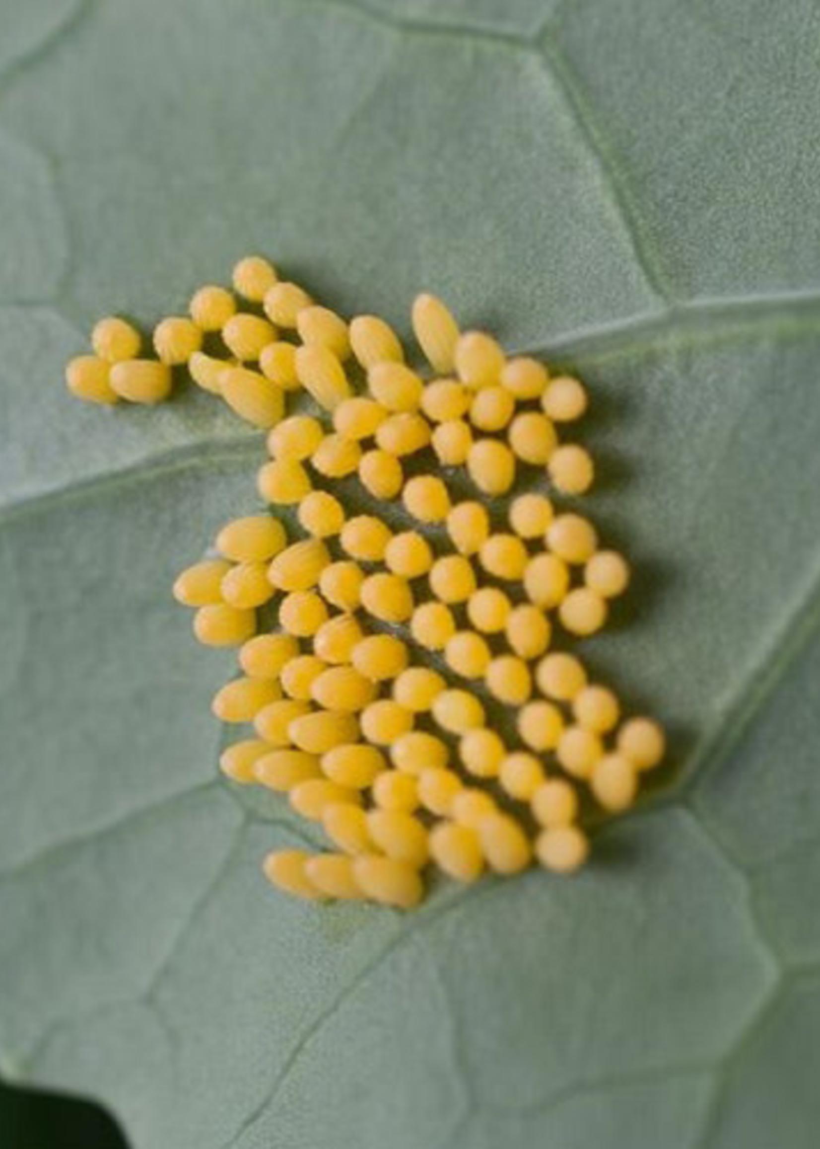 Insect, Caterpillar