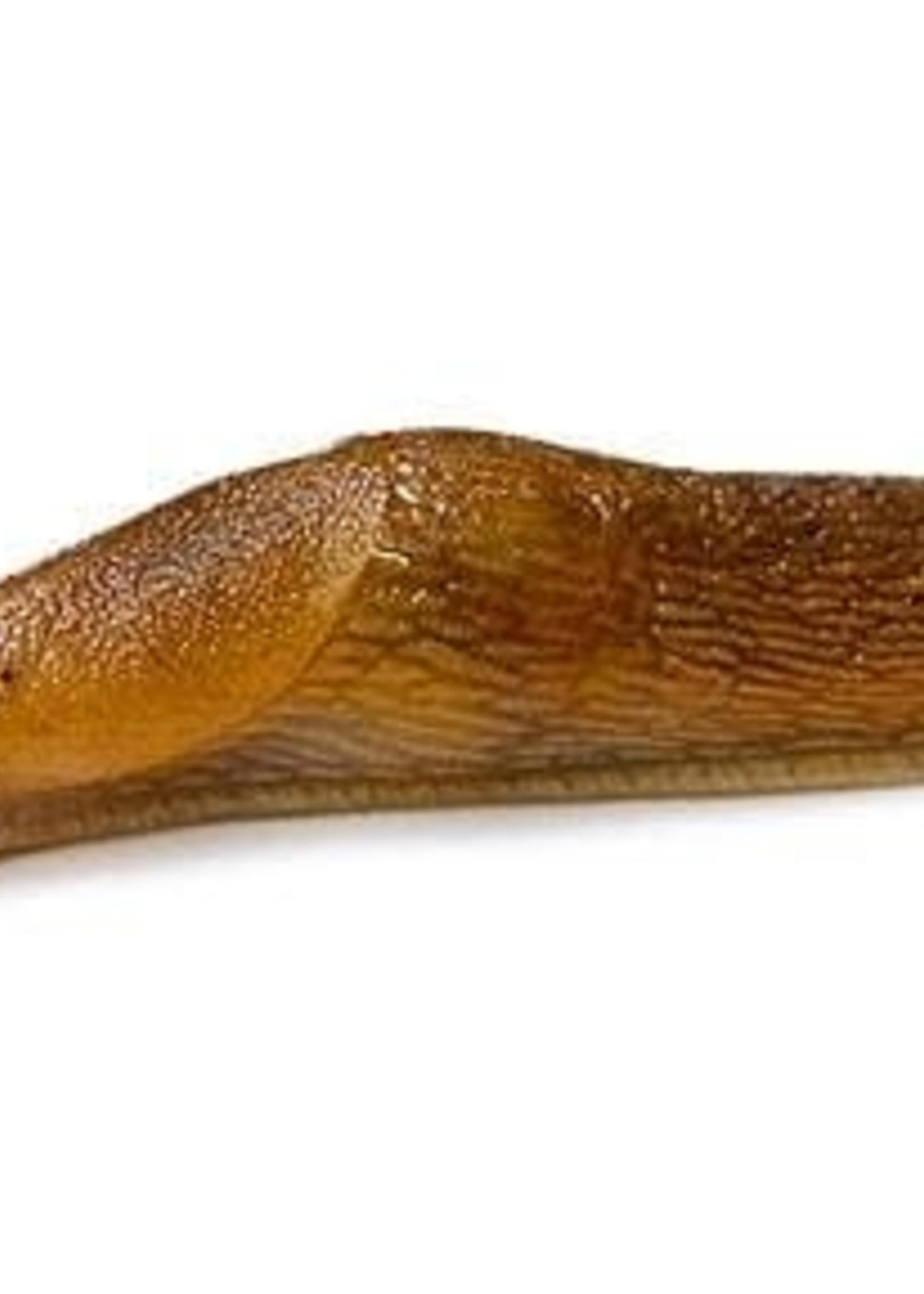 Insect, Slug