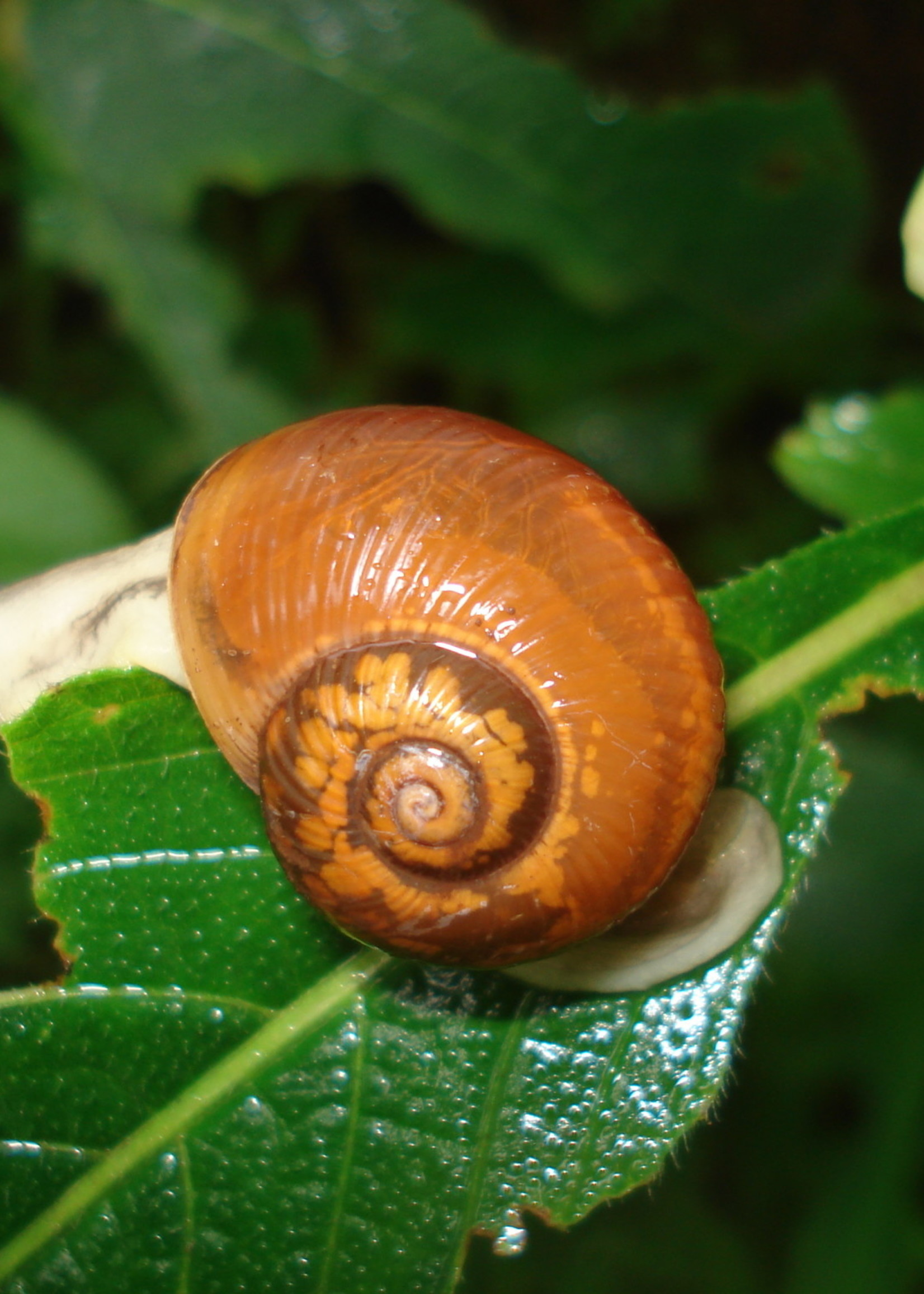 Insect, Snail