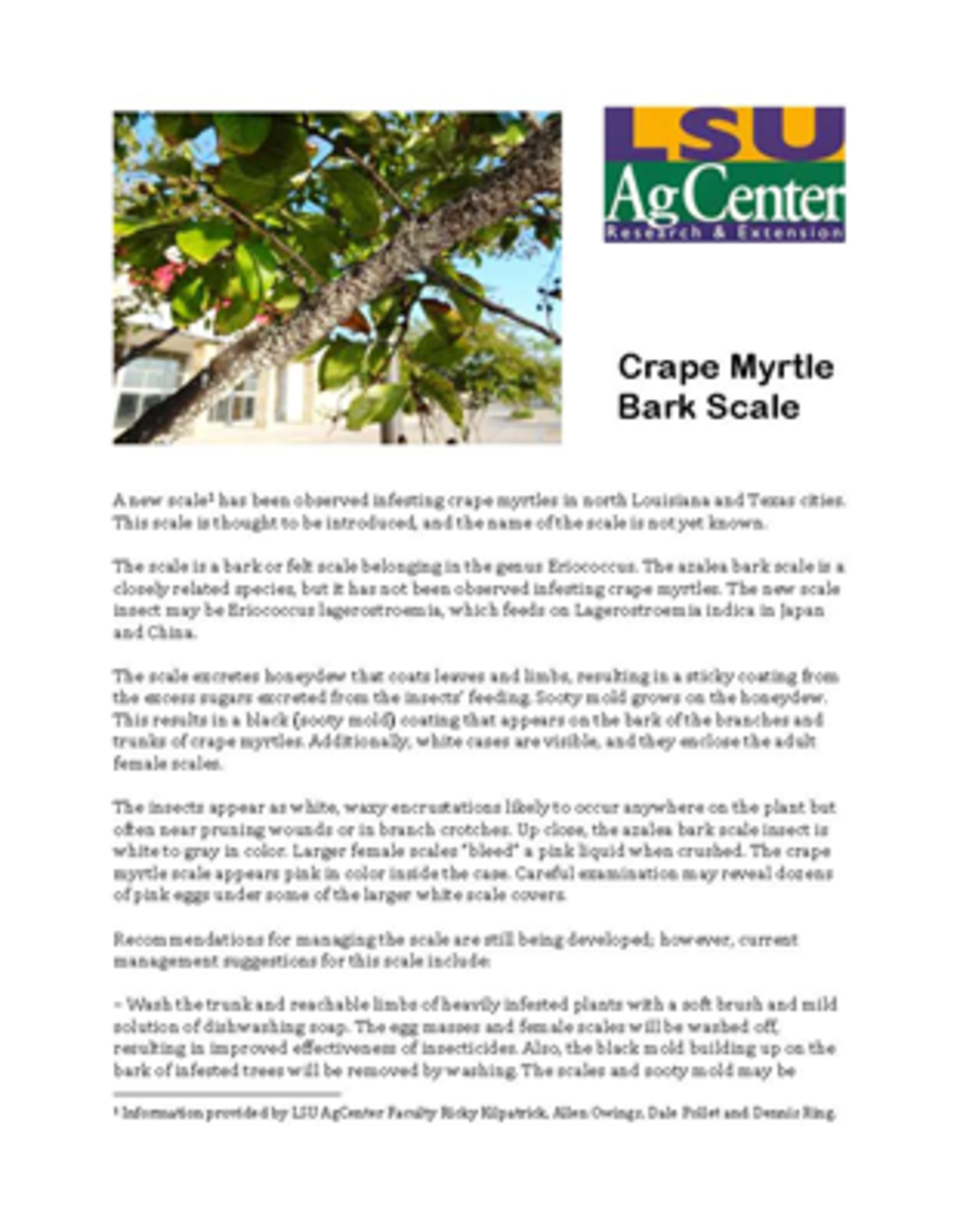 Crape Myrtle, Insect, Scale