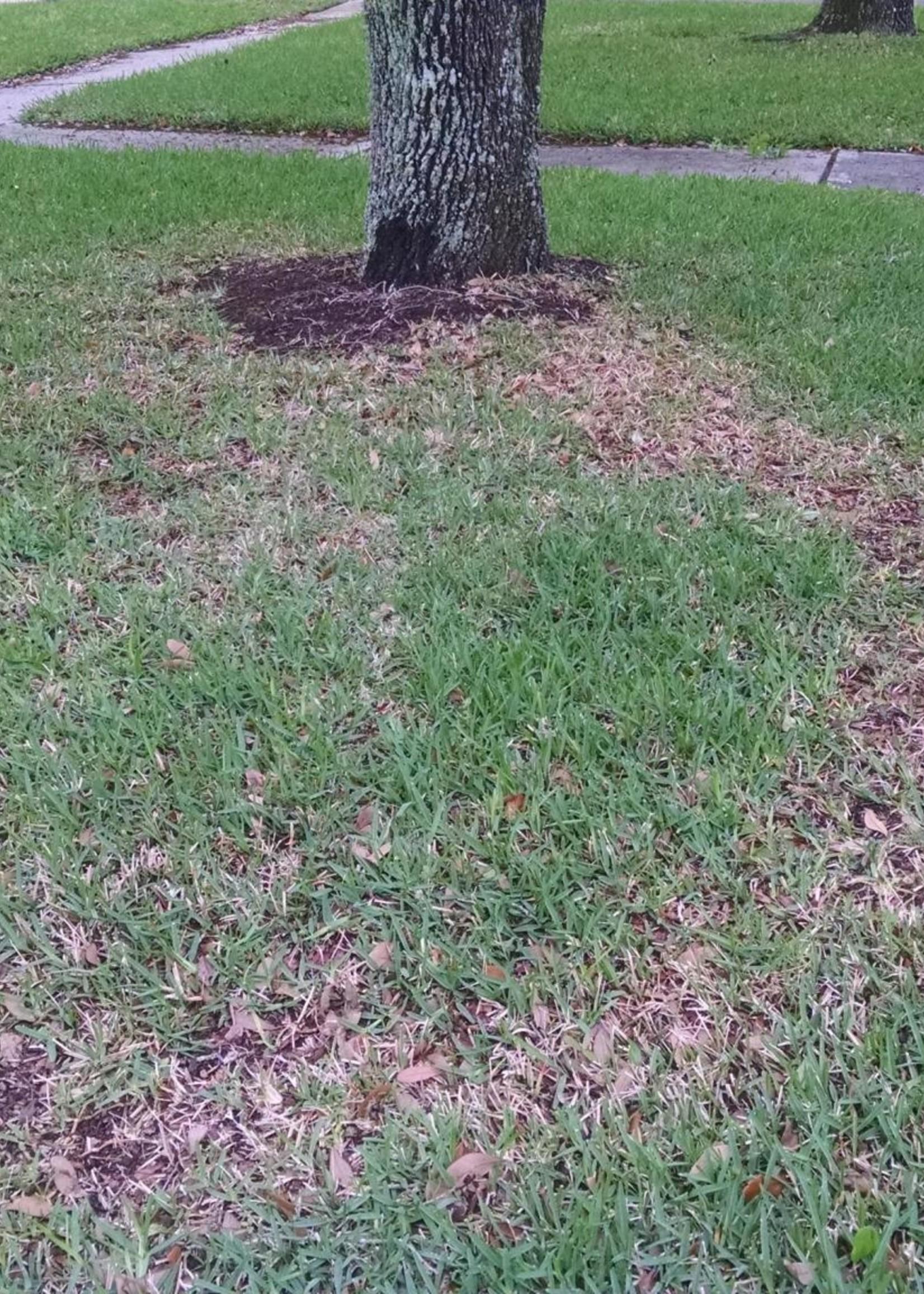 Lawn, Take All Patch