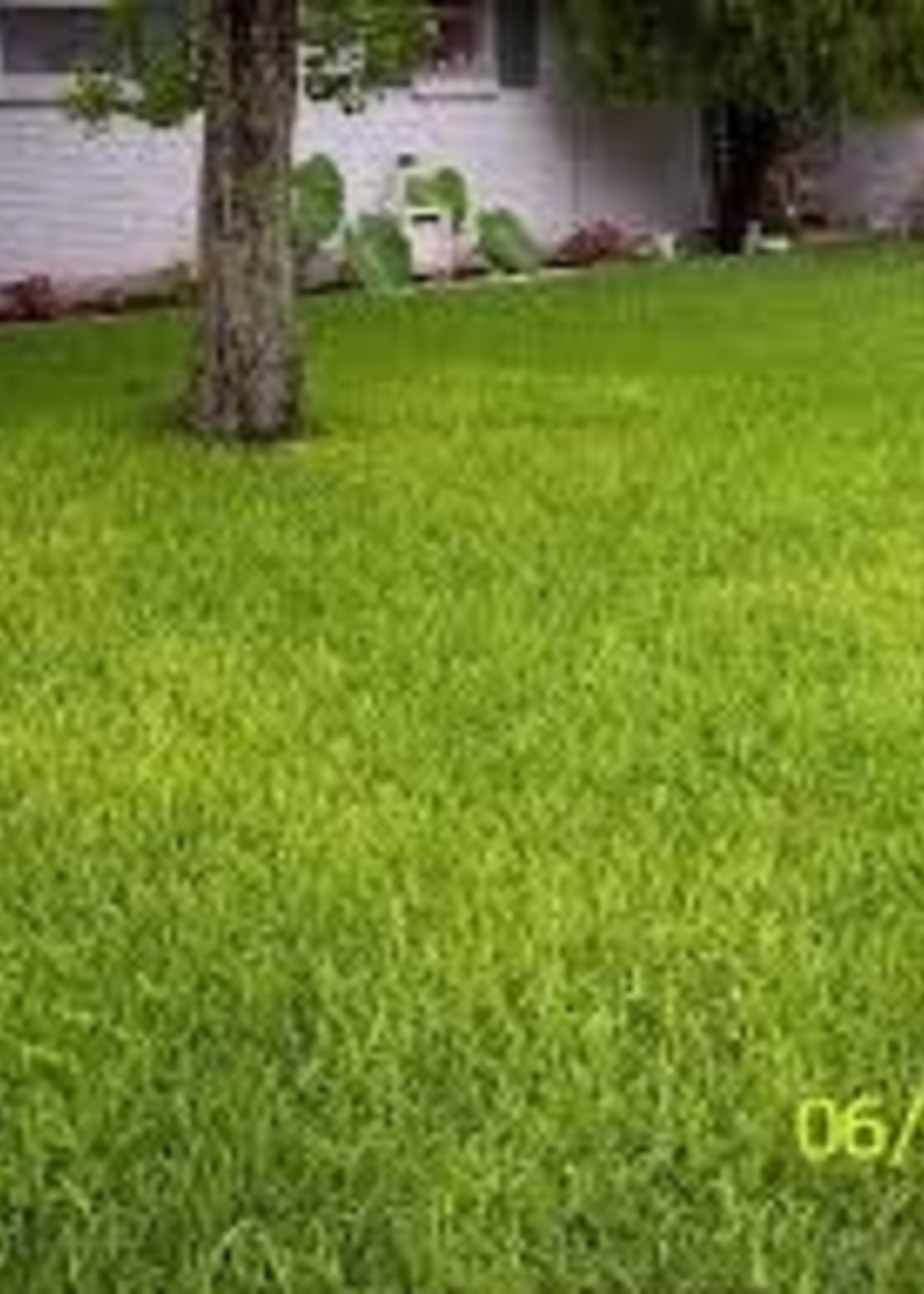 Lawn, Yellowing Grass