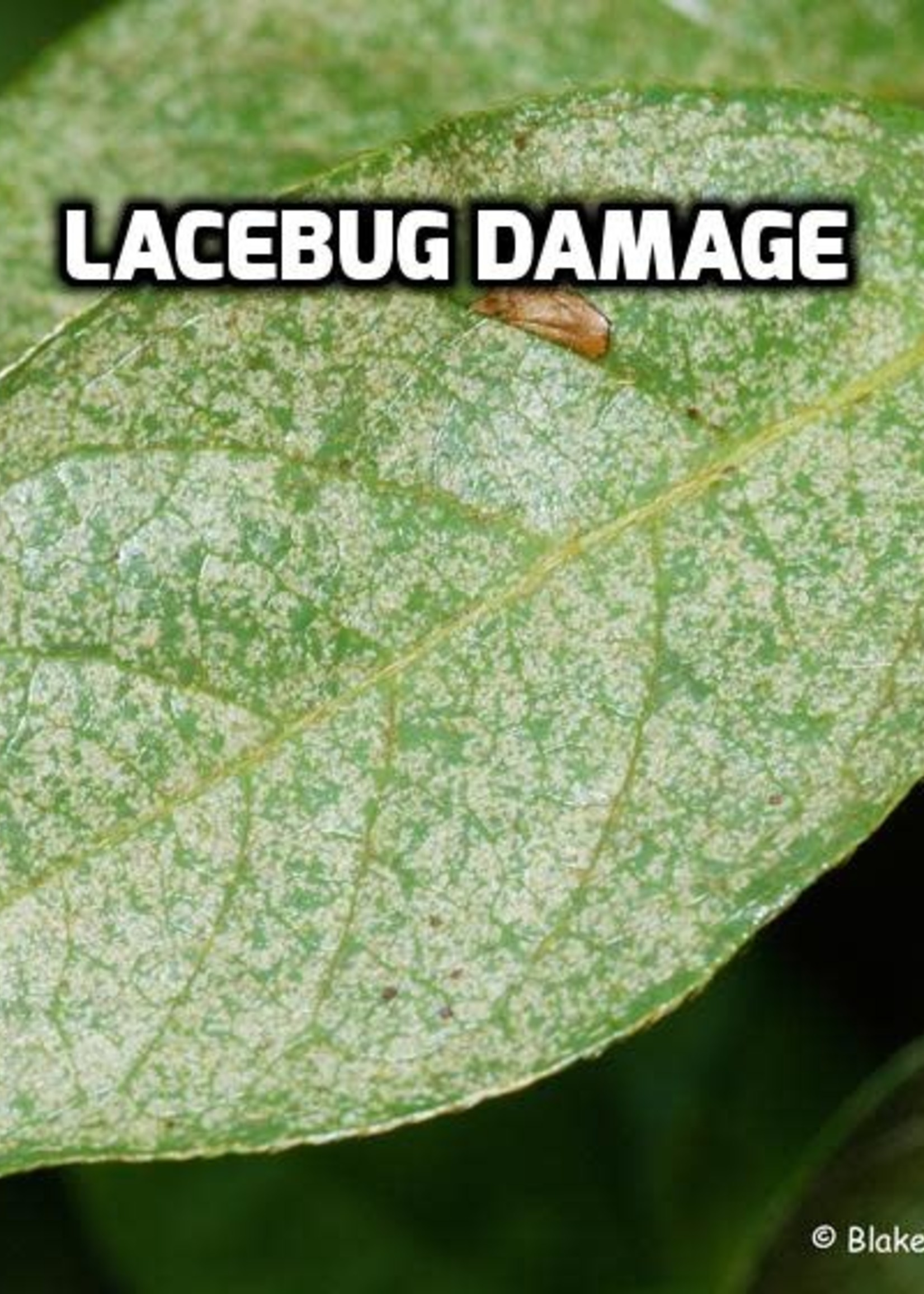 """Leaf, """"Bleaching Out"""""""