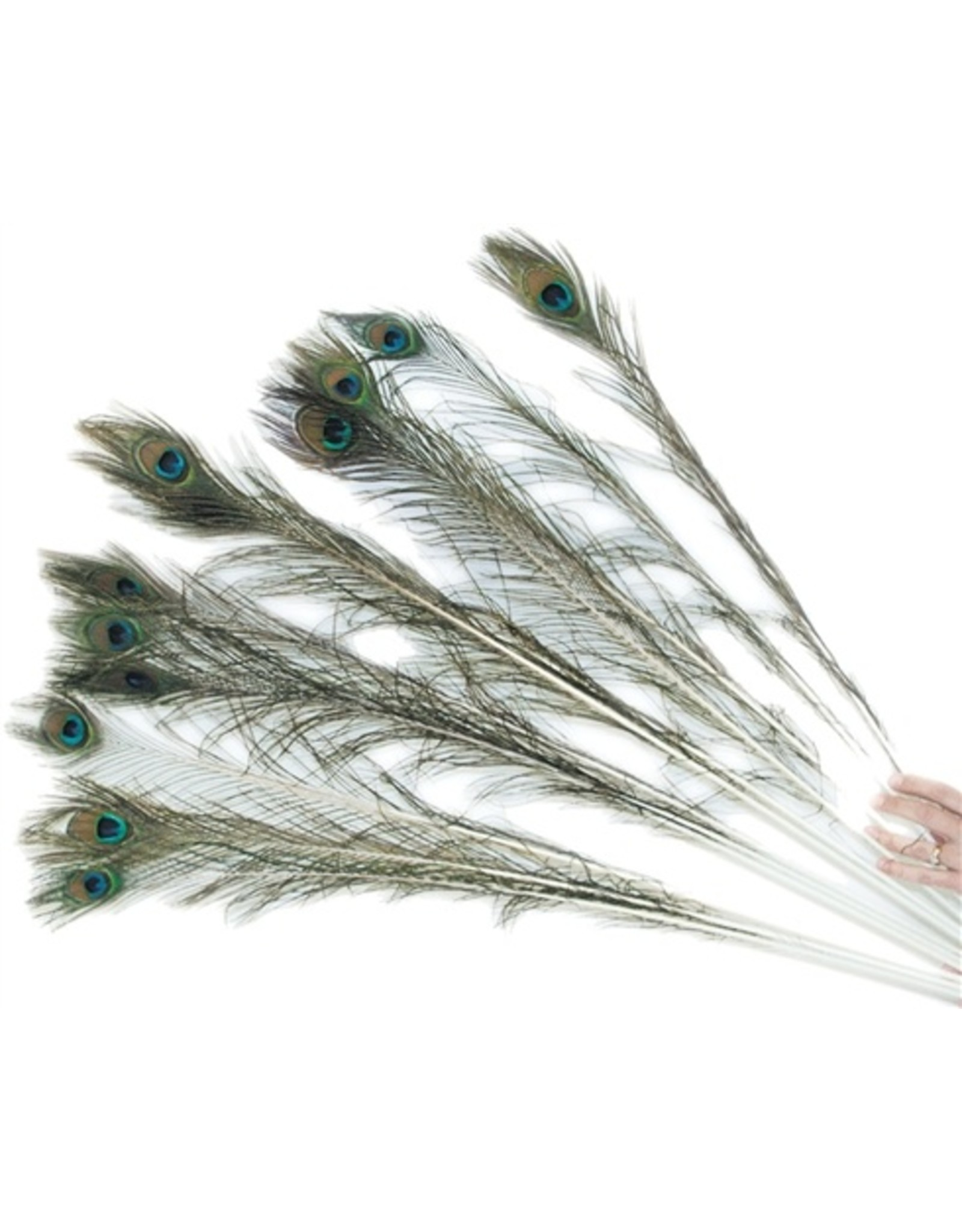 Imperial Cat Imperial Cat Peacock Feather
