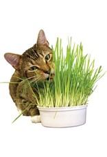 Imperial Cat Imperial Cat Snac'n Treat Easy Grow Oat Kit