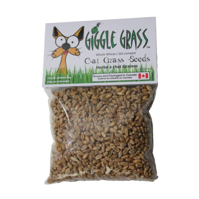 Giggle Grass grass seeds