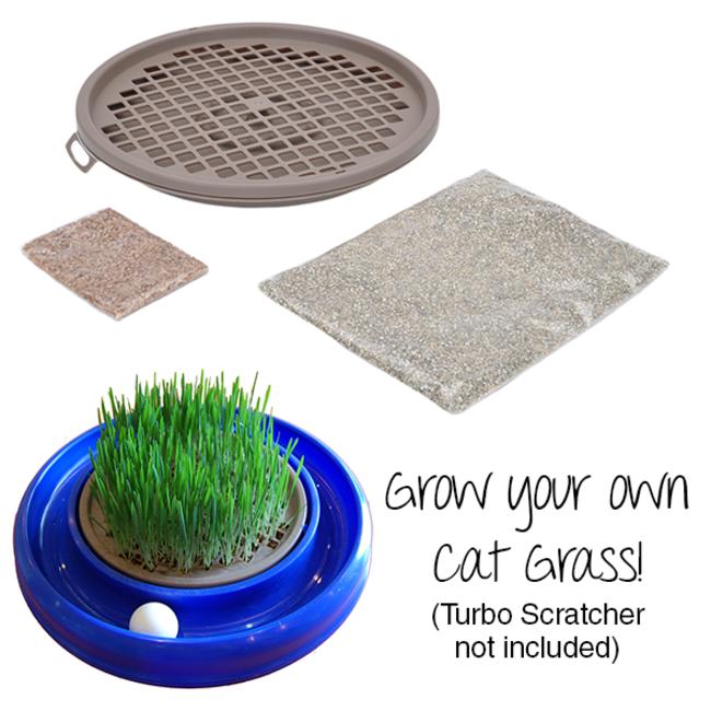 Coastal Turbo Cat Grass
