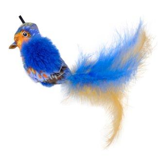 Coastal Blue Bird