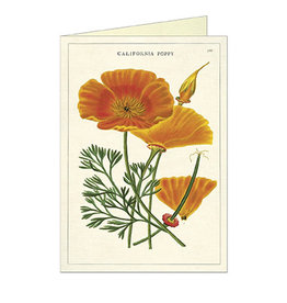 Cavallini Papers & Co. California Poppy Brittany Notecard
