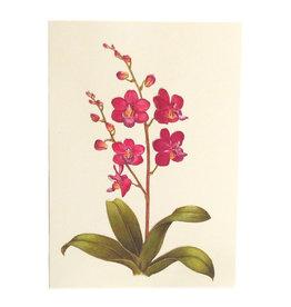 Paula Skene Designs Orchid Sympathy Card