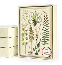Cavallini Papers & Co. Ferns Boxed Notecards