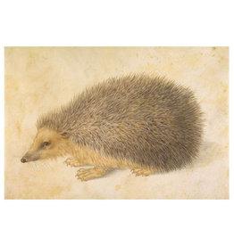Pomegranate Hans Hoffmann: A Hedgehog Postcard