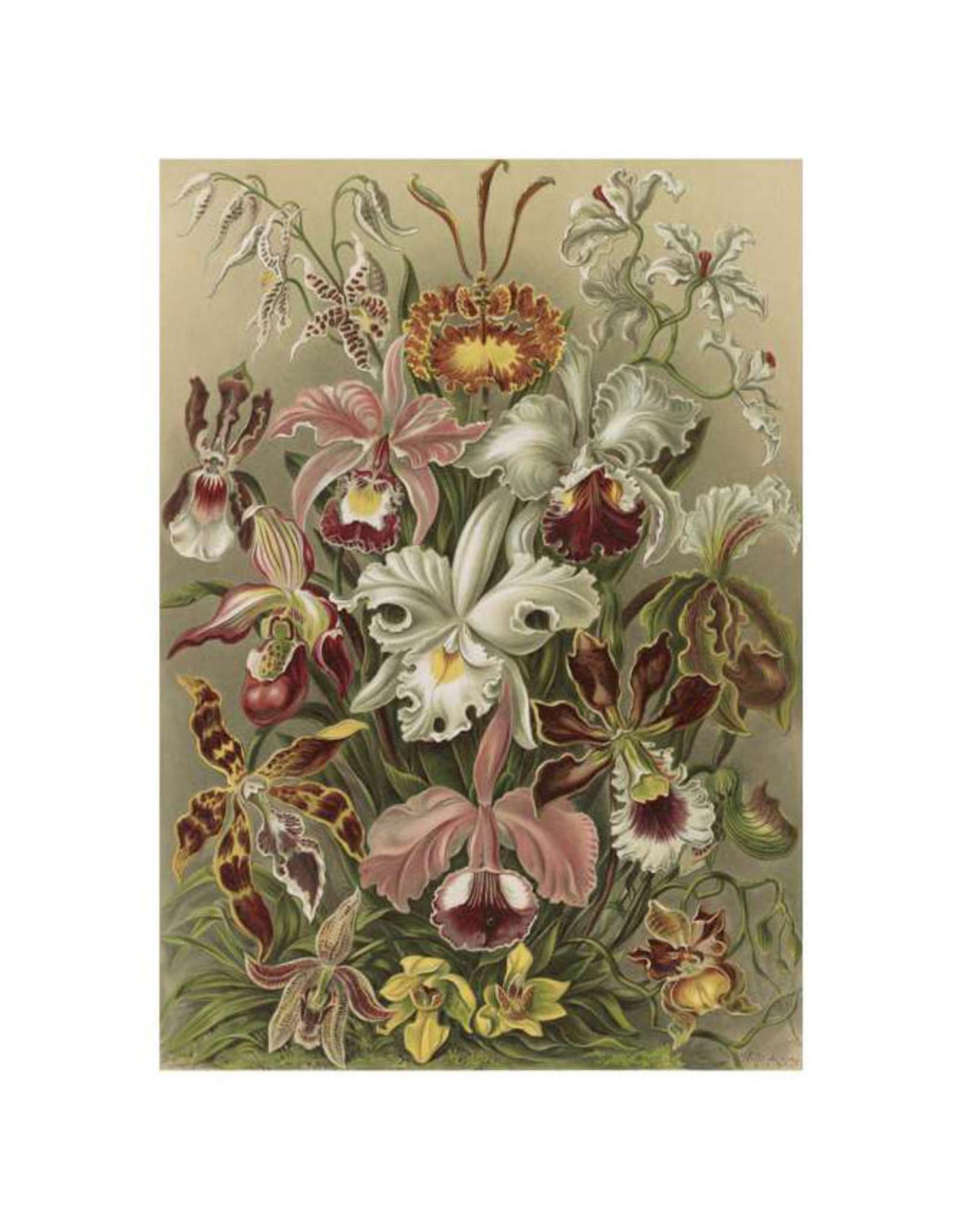 Pomegranate Ernst Haeckel: Orchids Everyday Notecard