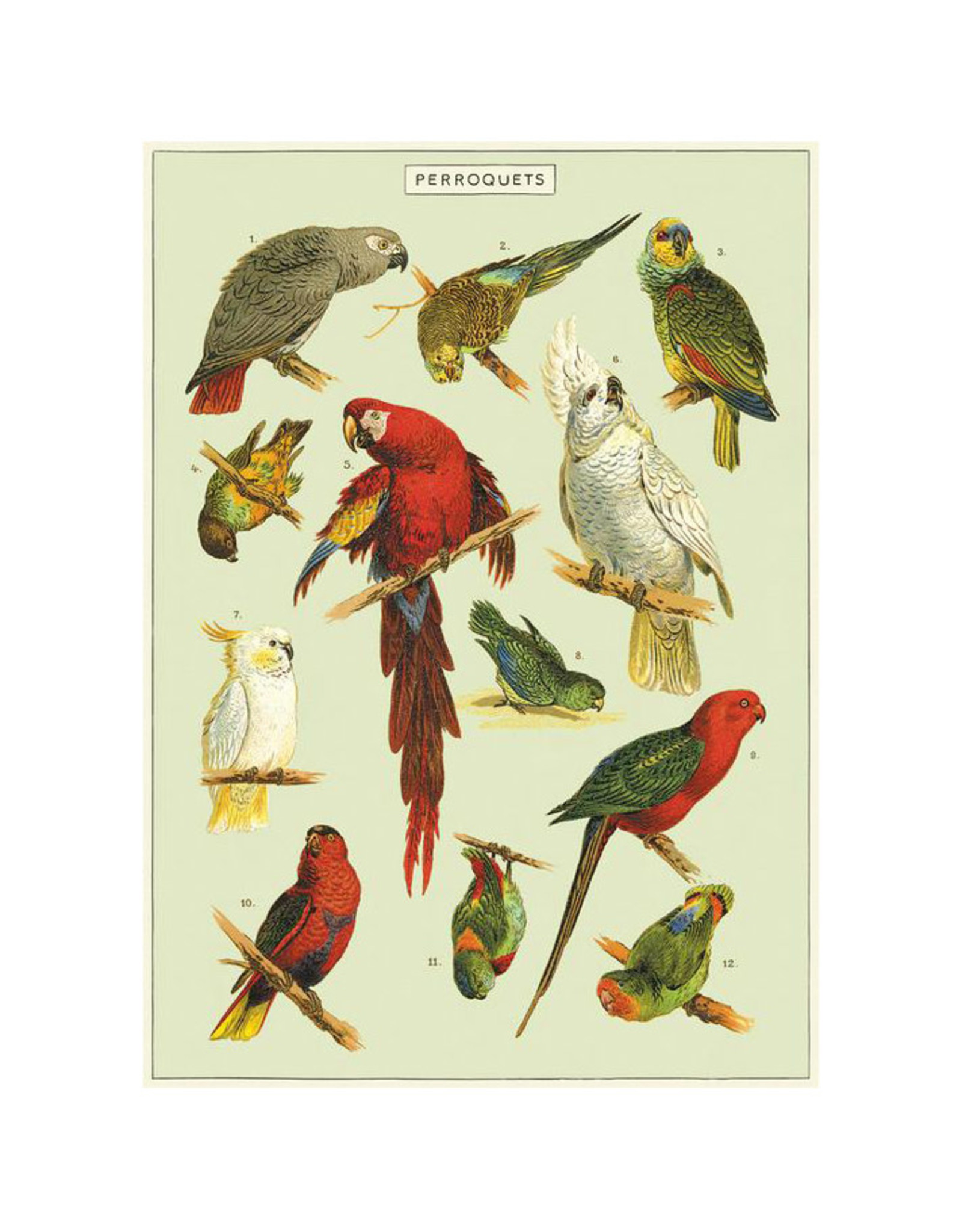 Cavallini Papers & Co. Wrap Parrots
