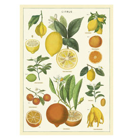 Cavallini Papers & Co. Wrap Citrus
