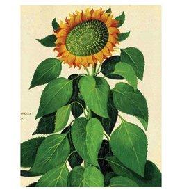 Cartolina Sunflower A2 Everyday Notecard