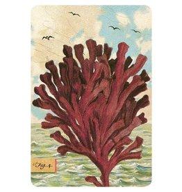 Cartolina Seaside Kelp Postcard