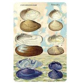 Cartolina Seaside Clam Postcard