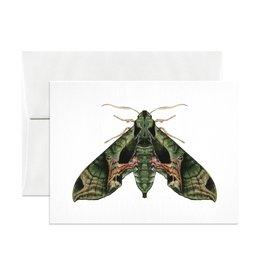Open Sea Design Co. Pandora Sphinx Moth A2 Everyday Notecard