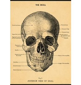 Cavallini Papers & Co. The Skull Wrap
