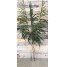 """Botanico UVA Stalk  90""""  Lime 3 Par Paquet"""