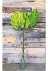"Botanico Anahaw  Large  Green 55"" -3 Par Paquet"