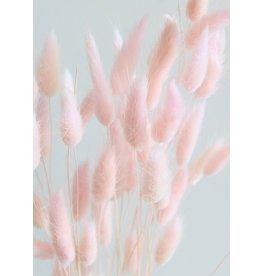 "Botanico Bunny Tails 16"" Pink 50 Par Paquet"