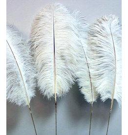 Botanico Ostrich Feathers Ivory