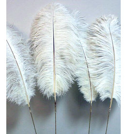 Ostrich Feathers Ivory