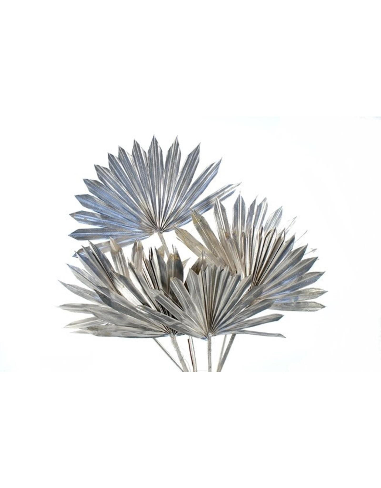 Botanico Palm Sun Platinum 10p