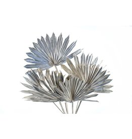 Palm Sun Platinum 10p