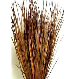 Wild Grass Brown 40po