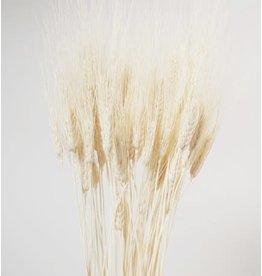 Wheat Bleached 30po /5 per pack