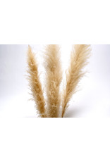 "Botanico Pampas Grass 60"", Cream /3 per pack"