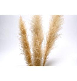 """Botanico Pampas Grass 60"""", Cream /3 per pack"""