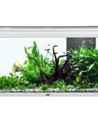 """AQUATLANTIS Elegance Expert 100 Aquarium - (Grey) -  40.25"""" x 15.75"""" - 51.5 gal"""