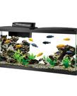 AQUEON LED Aquarium Kit 55 gal
