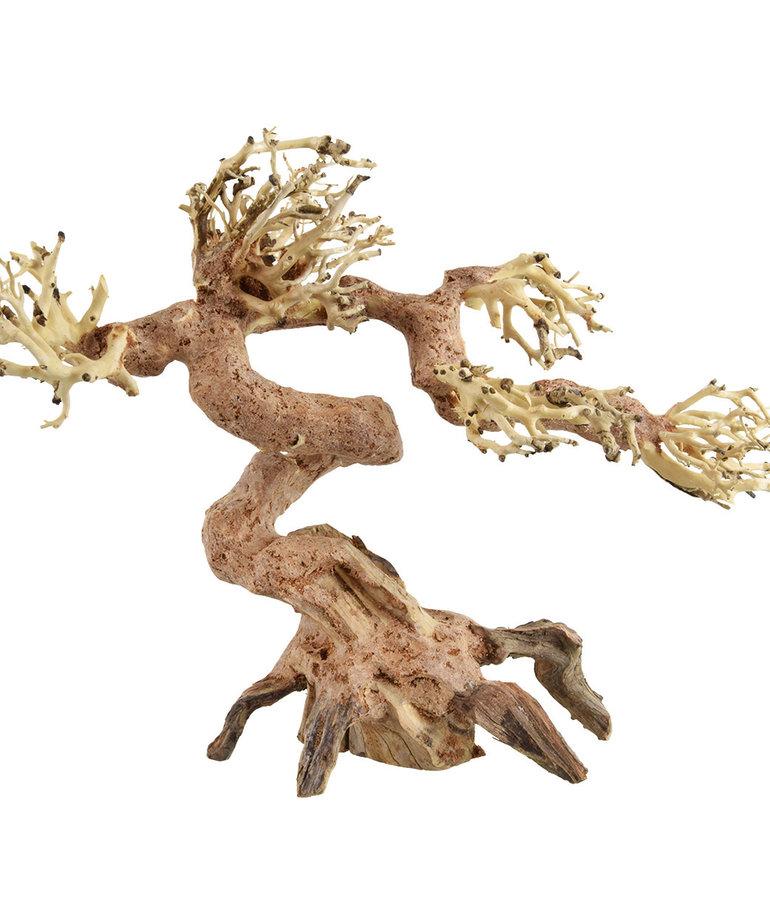 UNDERWATER TREASURES Claw Bonsai Wood - X-Small