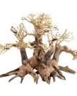 UNDERWATER TREASURES Twins Bonsai Wood - Small
