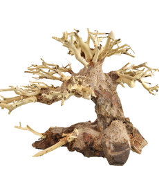UNDERWATER TREASURES Bonsai Wood – XX-Small